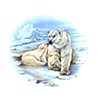 Animals polar bear