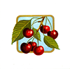 Fruit cherries