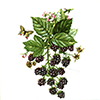 Fruit rasberries with small butterfly